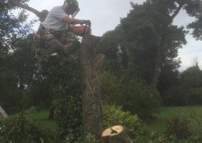 high treework bilborough tadcaster